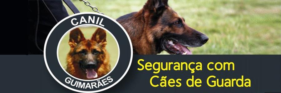 Empresa de adestramento de cães em São Vicente